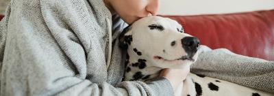 Dalmatian cuddled with owner